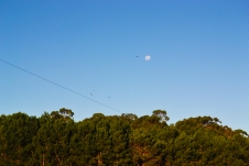 Águilas y luna llena en Sta. Teresa