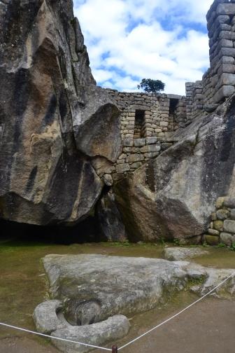Condor, Machu Picchu
