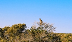 Addo National Park (17).