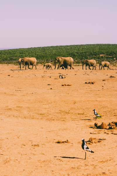 Addo National Park (2).