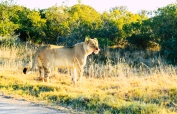 Addo National Park (21).