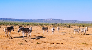 Addo National Park (9).