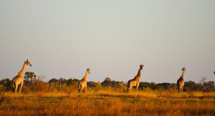 Delta de Okavango (39)