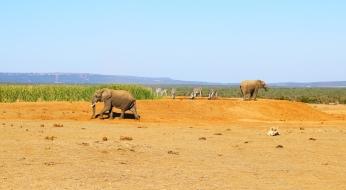 Elefantes (6)