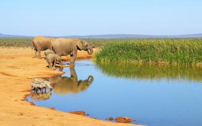Elefantes y pumbas
