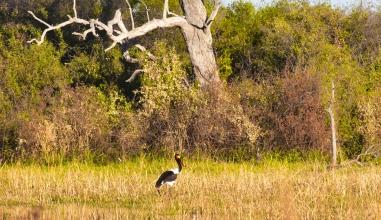 Delta de Okavango (49)
