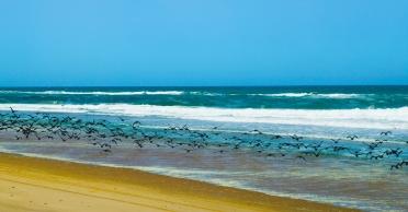 Walvis Bay (19)